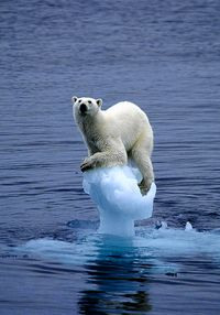 Iceberg1DM0404_468x670