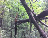 Fallen_tree_moraine_091408_015_kms